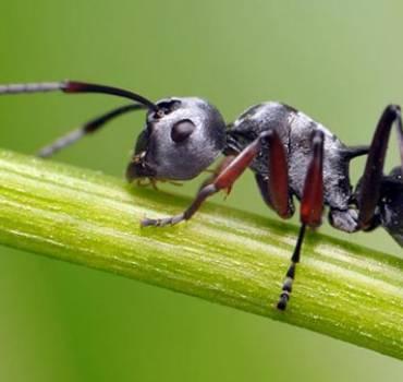 Dedetizacao de Formigas
